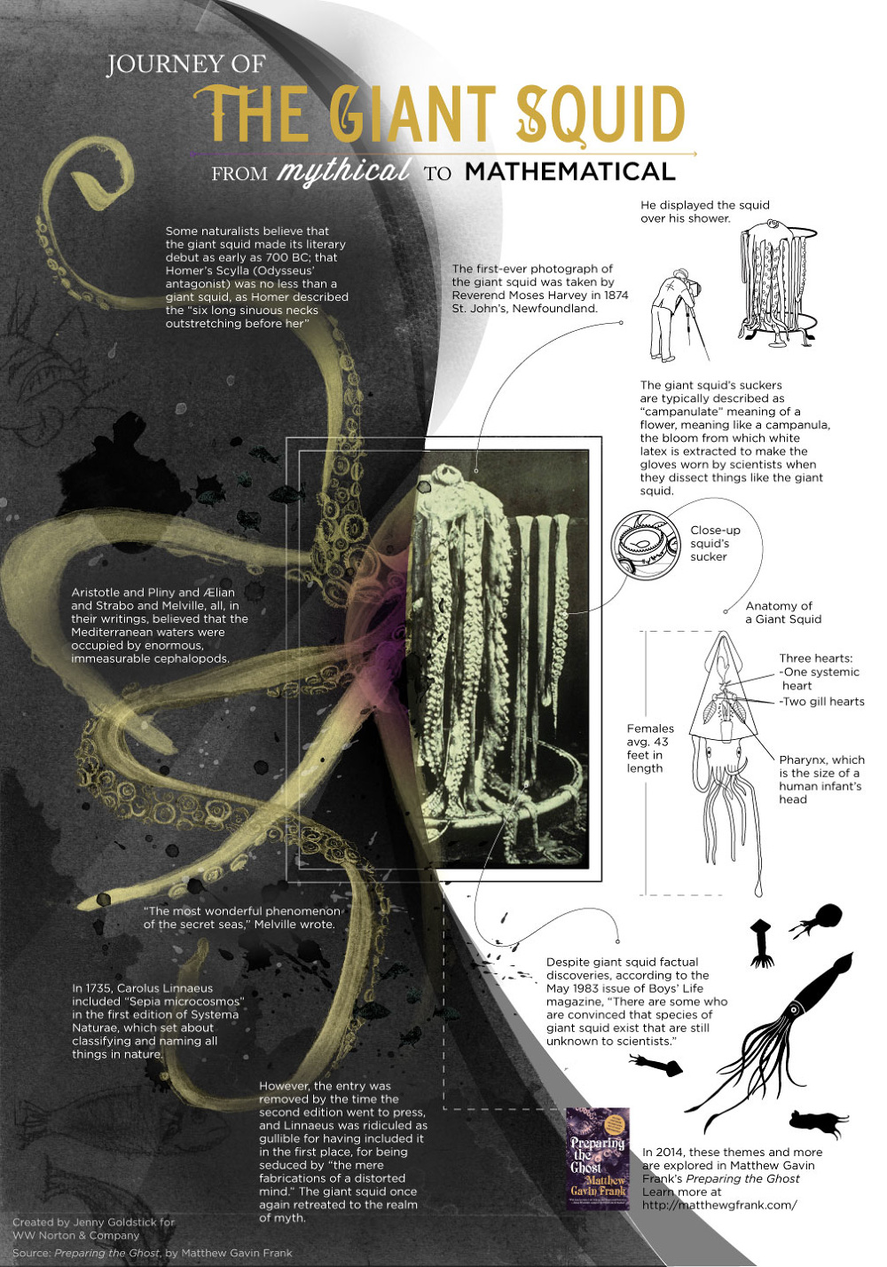 Goldstick_WWNorton_GIant_Squid_Diagram_1000
